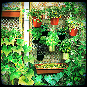 Vegetable vertical gardening